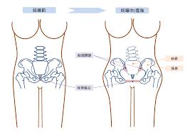 骨盤低筋群とは?産前~産後骨盤ケアの画像